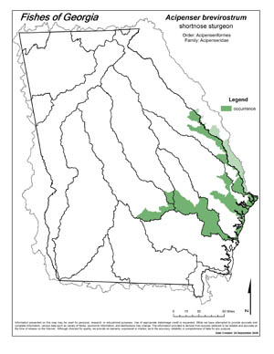 shortnose sturgeon Region Map