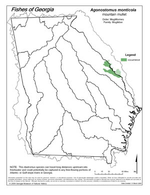 mountain mullet Region Map