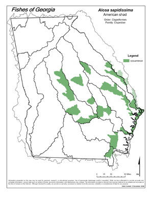 American shad Region Map