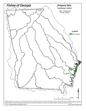 hardhead catfish Region Map