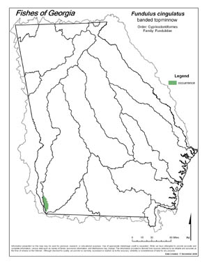 banded topminnow Region Map