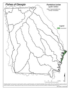 spotfin killifish Region Map