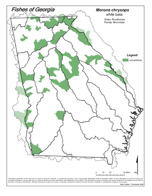 white bass Region Map