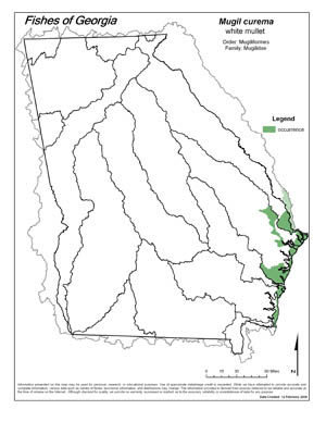 white mullet Region Map