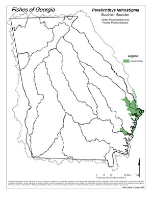 southern flounder Region Map