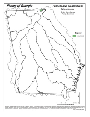 fatlips minnow Region Map